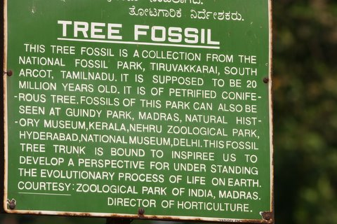 Description of Tree Fossil, Lalbagh, Apr 07