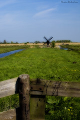 (*Simian*) Tags: holland netherlands field