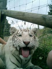 Usmivka (Vanya Simeonova) Tags: lionpark