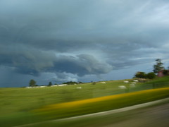 (sofia ) Tags: road travel light brazil sky storm color rain clouds contrast cattle sony sonydscs40
