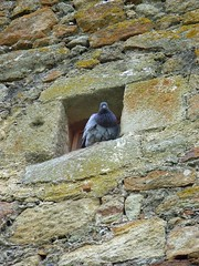Pigeon hole (sillie_R) Tags: bird architecture spain pals catalunya prigeon