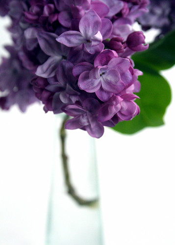 Sweet lilac in vase