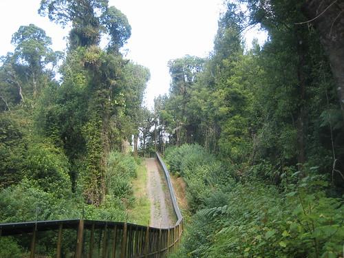 Flora y la fauna de Nueva Zelanda