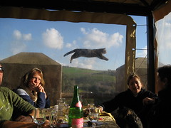 might as well jump (paolotinari) Tags: friends cat fur lunch flying jump feline flight right moment capture ceri thecatwhoturnedonandoff
