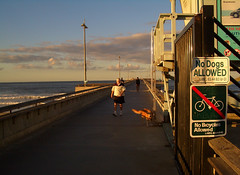 No dogs allowed (Hayden Yates) Tags: morning venice beach dogs sunrise peeing nodogsallowed
