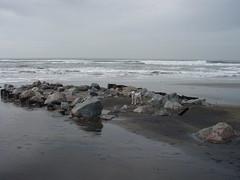 lyle on the rocks (judith) Tags: fortfunston lyle
