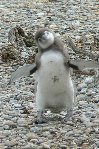 penguin shrug