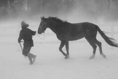 Walking the horse (Mr. Physics) Tags: ranch winter horse snow storm cold nature woods wind farm pair freezing blowing freeze fullhouse flush february straight equestrian trot stallion winterstorm 3ofakind msoller abigfave 2pair artlegacy