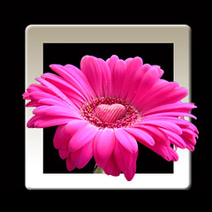 gerbera heart oob (square) (Vanessa Pike-Russell) Tags: pink flowers windows macro photoshop iso200 bestof cs2 vibrant photoshopped flash australia adobe gerbera frame nsw mostinteresting portfolio popular f5 tutorial 2007 wollongong myfaves fired oob s5600 160s 63mm mootrade 603100 440100 vanessapikerussell
