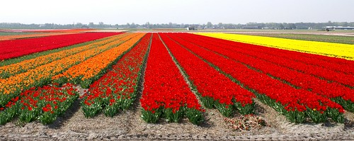 Spring in Holland (3)