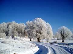 Talv - Winter (j.anne4 ( Janne )) Tags: winter sun snow tree landscape topf50 bravo flickr trophy lumi puu talv pike aclass oneness naturesfinest blueribbonwinner maastik specland theworldthroughmyeyes mywinners abigfave welcometoestonia 30faves30comments300views anawesomeshot impressedbeauty superaplus aplusphoto flickrhearts faithfulflickrfriends 200750plusfaves superbmasterpiece brpblue favemegroup6 flickrdiamond akonkurss blueribbonwinnerkonkurssmrts superhearts lunarvillage janne4janne