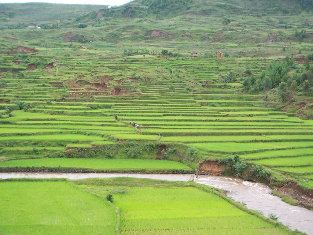 Madagascar, rizières