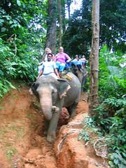 Слоники бодро ходят по любым склонам.
