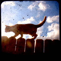 walk the line (uhoh over) Tags: sky cat fence square viewfinder jeebus ttvf