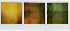11:32 pm (flybutter) Tags: abstract collage polaroid grid triptych mosaic 600 onestep flybutter ridiculouslyexpiredfilm tapeoshop polatryptich toasterovendamaged