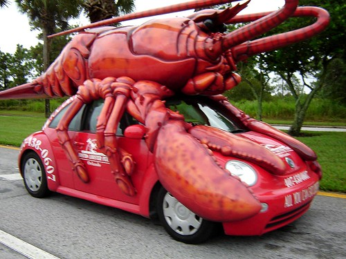 Lobster Beetle