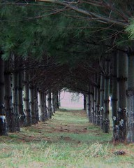 (Bravo213) Tags: trees badge cy challengeyouwinner cywinner bravo213 thechallengefactory