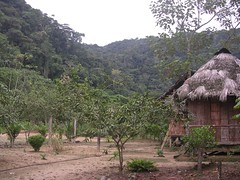 Ecotourism in the Amazon Alucus indigenous community Tena Ecuador