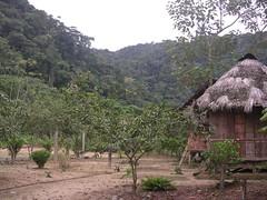 Ecotourism in the Amazon Alucus indigenous community Tena Ecuador