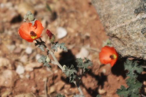 Little Orange Flowers