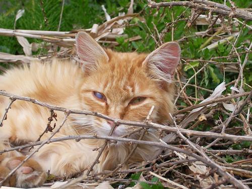 誰もいなくても生きる。誰にも生きる許しをもらわずに生きる。それが「ノラ猫の道」ってもんよ。