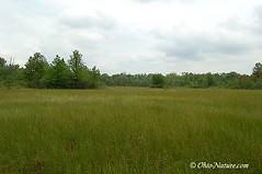 Irwin Prairie