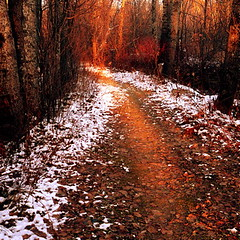 Sunrise on my wild path! (Denis Collette...!!!) Tags: road autumn light sun snow canada sunrise automne soleil bravo peace searchthebest path lumire qubec neige sentier chemin voie paix leverdesoleil themoulinrouge firstquality flickrsbest abigfave vision1000 shieldofexcellence anawesomeshot visiongroup deniscollette infinestyle diamondclassphotographer flickrdiamond excellentphotographersaward theunforgettablepictures thegoldenmermaid thegardenofzen thegoldendreams world100f multimegashot vision100 vision10000