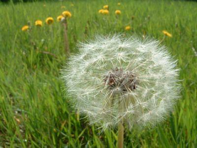 Thêm một chút cho hoa Bồ Công Anh - By Boong Boong - Yahoo 360! 430193715_a3c88cfca0