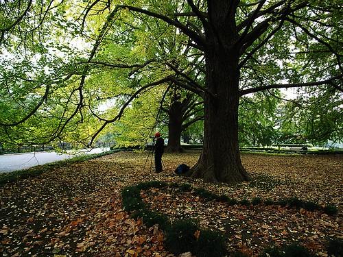 The photographer who takes autumn