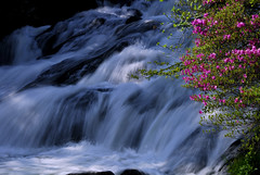 Stream and Flowers (straightfinder) Tags: nature japan landscape nikon bravo scenery 28105mmf3545d d200 nikko top10 nikkor  nikond200 ryuzu nikkonationalpark   hiroyukiw ryuzufalls superbmasterpiece