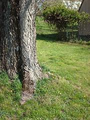 spring07_tree2