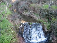 Another river another fall... (jPdF) Tags: winter cold green fall portugal nature water rio river stones farm formosa ribeiro mire charco proenaanova sobreira pucario