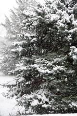 april snow-8 - by Mike Rodriquez