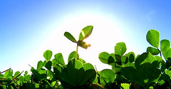 Autumn Sun (Thiru Murugan) Tags: blue autumn sun sunlight green afternoon pano halo noon murugan lowangle thiru thirumurugan thiruflickr