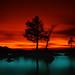 Lake Tahoe tree - by CowGummy