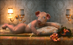 Bernie (Martine Roch) Tags: fiction baby strange animal vintage fun pig contest surreal manray miseenscne petitechose martineroch abigfave anawesomeshot impresedbeauty