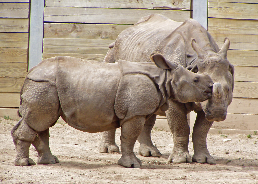 Mother and Baby Rhinoceros (Judge's Choice-Zoo Babies, 2005 Buffalo Zoo Photo Contest)