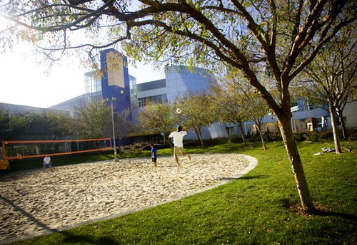 Google employees take an afternoon volley ball break. The corporations Mountain View campus is at once a flurry of playful activity and creative technological innovation