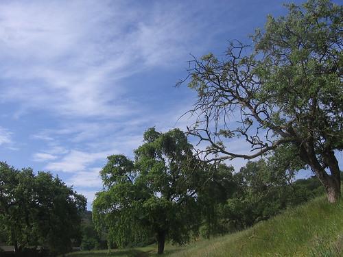 At Calero County Park