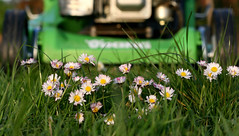 stop !!! (gundidepp) Tags: danger daisies gnseblmchen rasenmher lawnmover canoneos30d flickrsbest