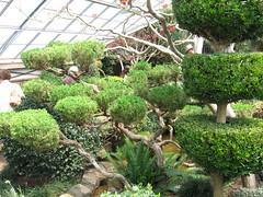 Duke Gardens-38   April 2007 (AuntLN) Tags: flowers gardens japanesegarden newjersey spring nj conservatory greenhouse zen dukegardens 2007 dorisduke displaygarden rugroup dukefarms 1000placesusa savedukegardens