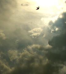 Define happiness (Lalallallala) Tags: sky italy cloud reflection river fly italia flight happiness swallow sora lazio posswin
