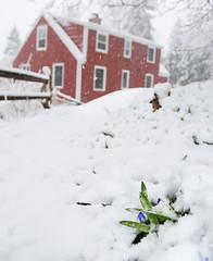 Spring at the backyard (Mingfong) Tags: white snow wisconsin spring snowy story madison stories 雪 白色 白 桌布 雪地 寒冷 mingfong mingfongjan 雪國 雪白 雪日 sketchoflight mingfongphotography