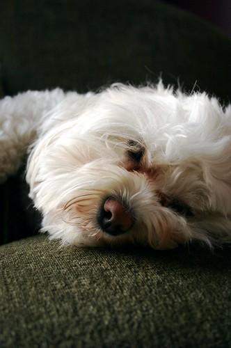 nappy nap
