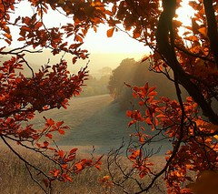Autumn Chiltern view (algo) Tags: uk autumn red england white green leaves misty topv2222 bronze landscape photography gold countryside interestingness topf50 bravo europe 500plus topv1111 chilterns buckinghamshire interestingness1 topf300 explore topv5555 fields top20hallfame top20landscape topv9999 topv11111 algo topv3333 topv4444 topf100 4autumn topf200 topv8888 topv6666 topf400 topf500 mc01 7777v77f topf700 topv33333 topf600 topv22222 topf1000 magicdonkey explored mostfavved 6666v66f 5620 explore1 gtaggroup goddaym1 3000v120f fivestarsgallery 6000v240f 800f bppslideshowautumn 800faves saariysqualitypictures