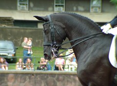 USEF Grand Prix Freestyle 6-18-2005 --  Rocher (Rock and Racehorses) Tags: horse big eyes freestyle mare nj ears explore jersey top20horsepix gladstone rocher canter loh dressage warmblood westphalen usef