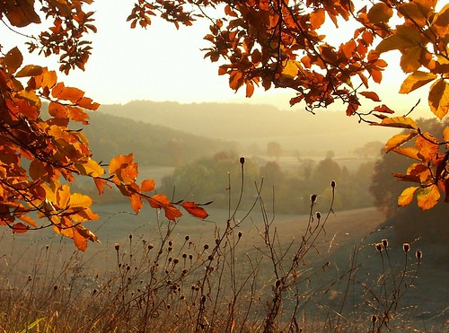 Autumn in the Chilterns by algo