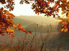 Autumn in the Chilterns (algo) Tags: autumn light england leaves topv2222 woodland landscape photography countryside interestingness topf50 topv555 topv333 view searchthebest topv1111 chilterns buckinghamshire interestingness1 scene hills explore topv5555 fields fv10 algo topv3333 landschaft topf100 topf200 beech 100f 200f 1500v40f explored explore1 exploretop20