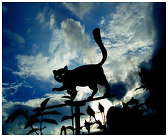 gatofalso (ibarak) Tags: blue sky deleteme9 topf25 azul clouds cat topv555 chat saveme3 topc50 interestingness1 bleu ciel gato cielo nubes contraste nuages topi defidefiouiner