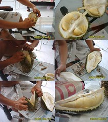 durians (miche) Tags: